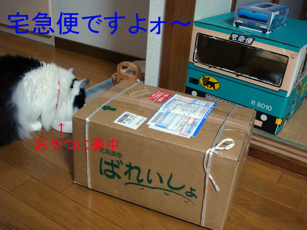 DSC08055.jpg