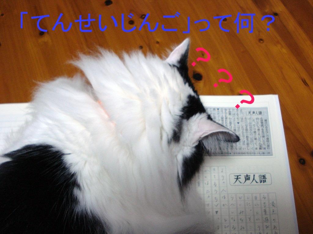 DSC08226.jpg