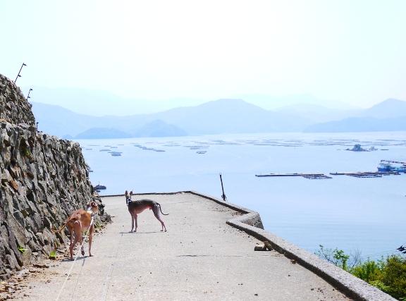 海に続く(ように見える)道