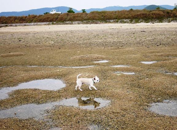 地面がぼこぼこなのは、潮干狩りの人が掘り返してるから~