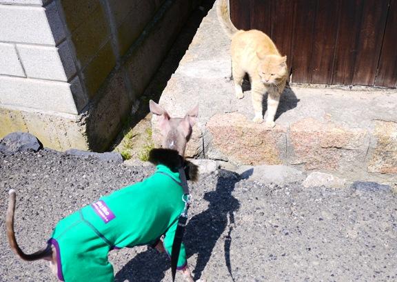 この後、猫じゃなくてトトが逃げた。。