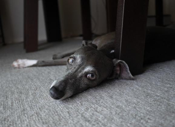 ソニちゃんは、この眼が魅力的だよね~♪