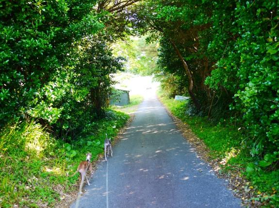 木のトンネル♪