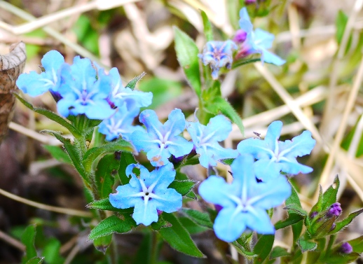 なんていう花かな?キレイな青色でした~