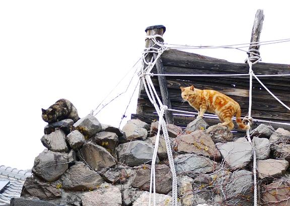 他にも見かけたけど、バラエティ豊かな毛色の猫たち。