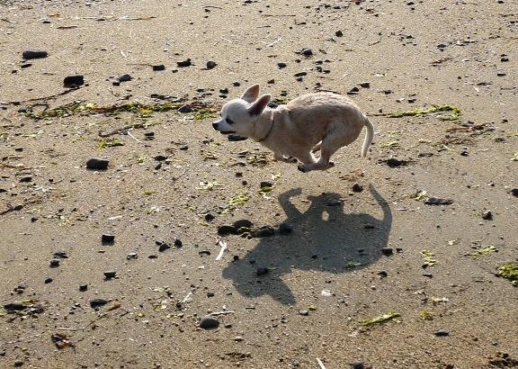 砂浜ではよく走ります♪