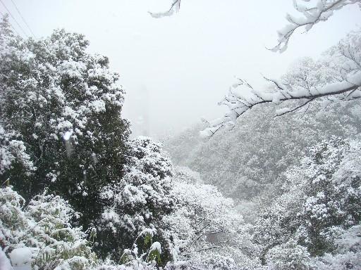 雪山DSC01710