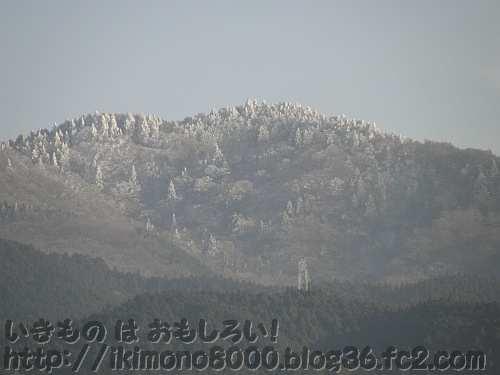 スポーツ公園から見た金剛山山頂付近