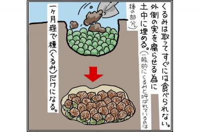 kaki_m_くるみ2_convert_20140919193214