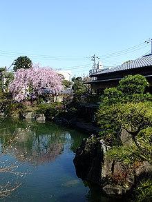 目白庭園@に本庭園好きにおすすめ!池袋のホテル