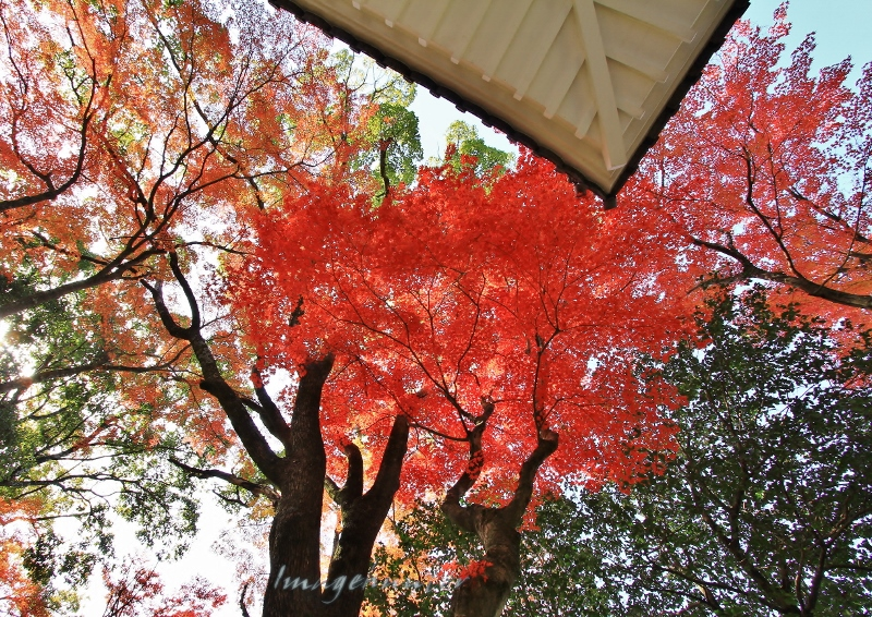 白屋根&紅葉