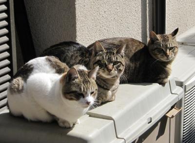 3庭猫たち