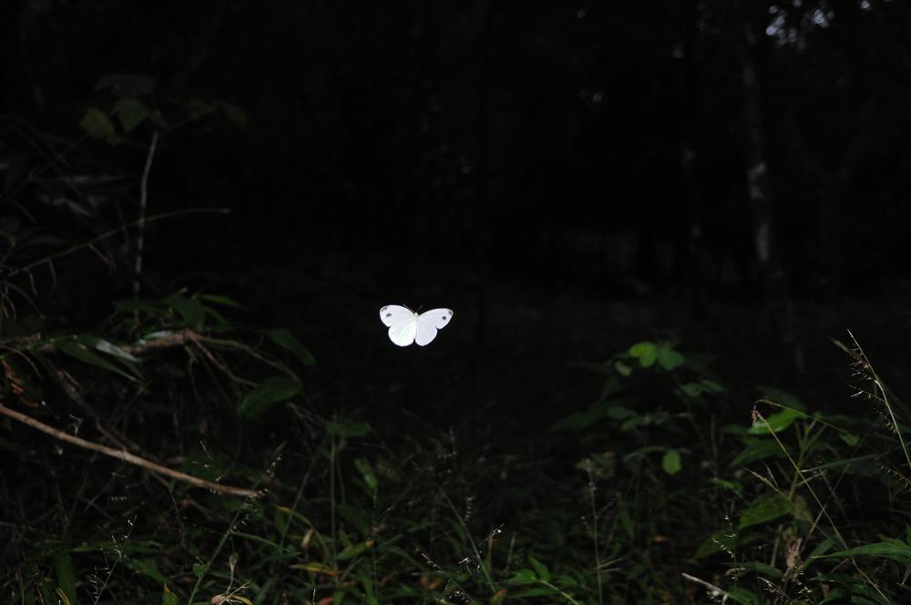 クロテンシロ 2012.01.10 1343