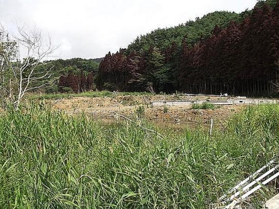 sinsai2011110404no49