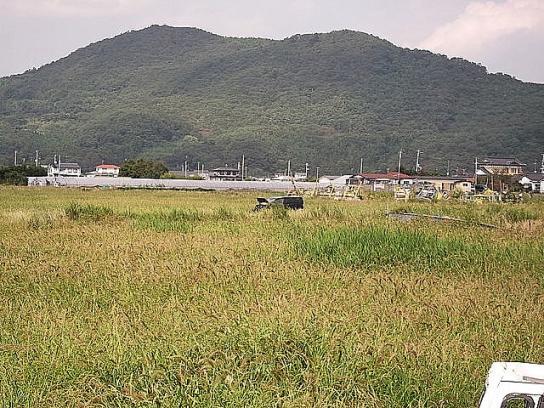 shinnsai2011111408no51