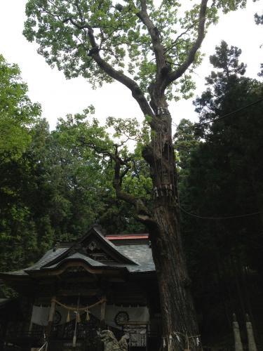 長岡神社2