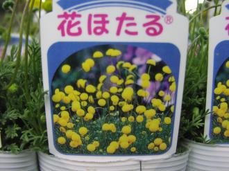 花ほたる3