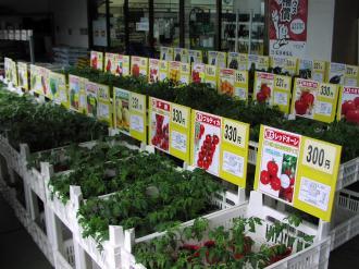 野菜苗2012
