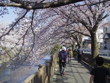 2012_hanami.jpg