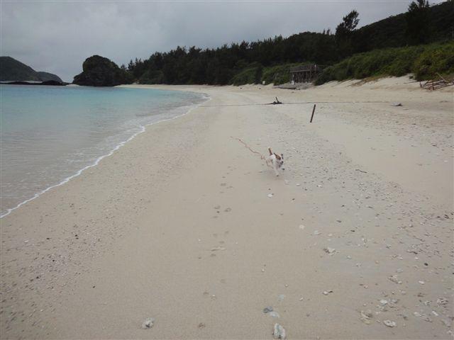2011 沖縄 2 249
