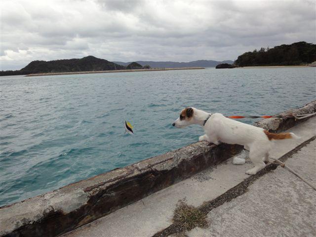 2011 沖縄 2 367