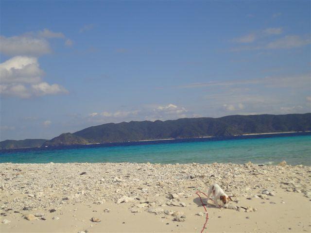 2011 沖縄 2 546