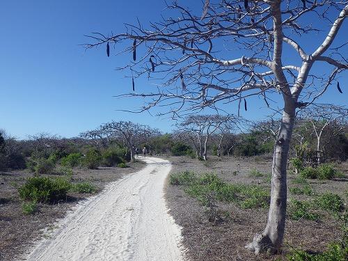 Madagascar (60)