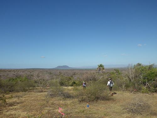 Madagascar (101)