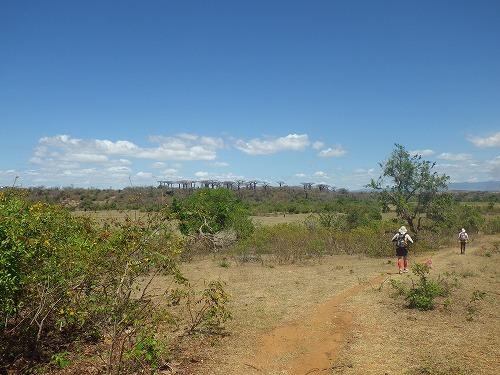 Madagascar (110)