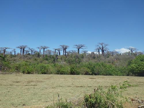 Madagascar (111)