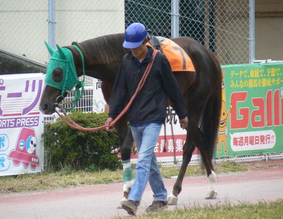 高知競馬8