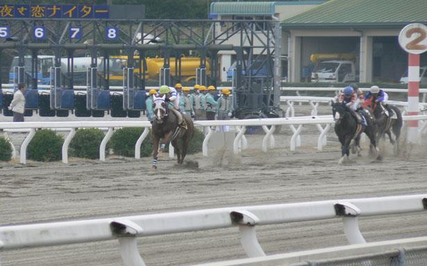 高知競馬9