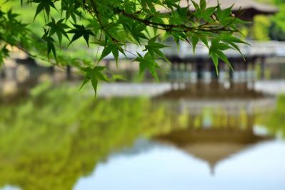 浮見堂と新緑モミジ