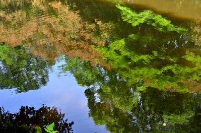 開山御廟池