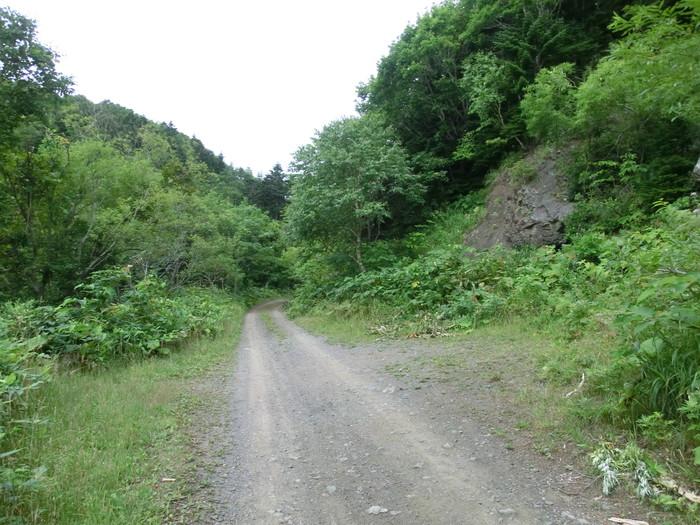 礼文林道 (11)