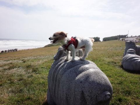 ヒツジに乗ったイヌ