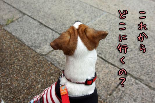 シオンどこ行くの 2013 08 23_6162