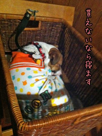シオンふて寝IMG_4572