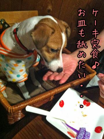 シオン完食IMG_4577