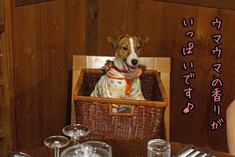シオンうまうま香り2013 08 23_6232