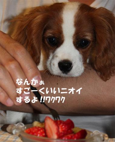 1いちご5 (2)