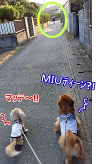 MIUティーン?!