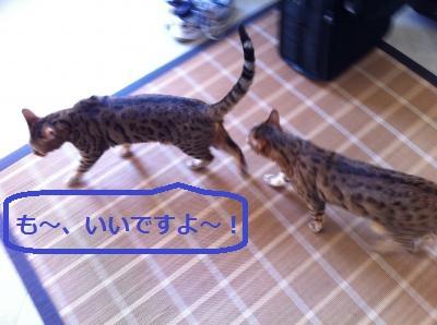 4_20110926153826.jpg