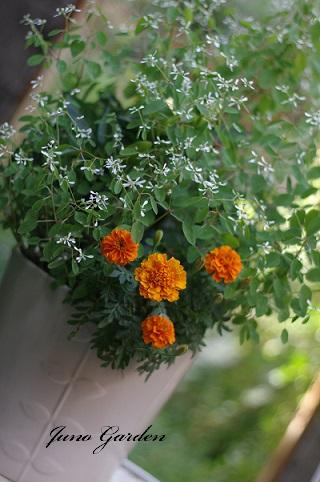 オレンジ寄せ植え
