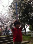お花見201303