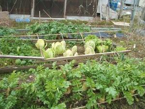 菜園2013-12-06-018