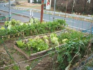 菜園2013-12-06-019