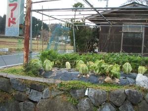 菜園2013-12-06-014