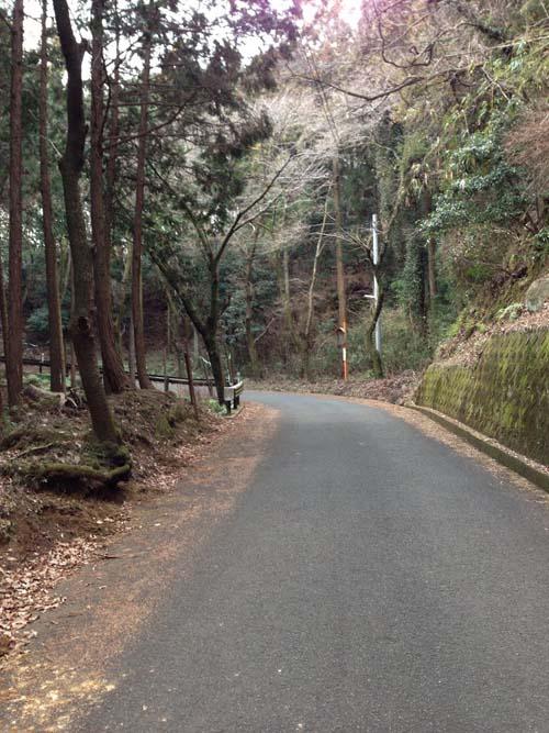 yakushi003.jpg