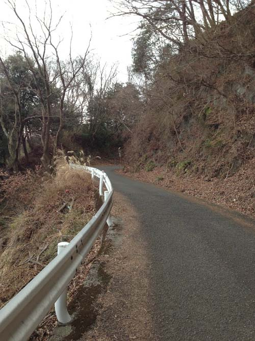 yakushi016.jpg